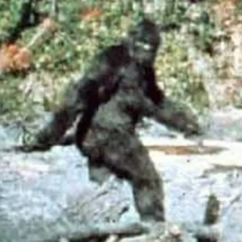 bigfoot-film-patterson-gimlin